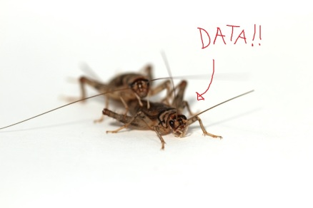 cricketdata