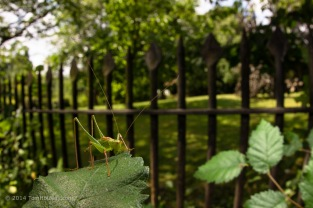 Bushcricket_wideangle